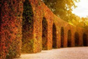 Conseil pour un beau jardin en automne